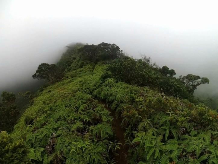 Super foggy