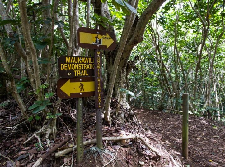 maunawili-ditch-trail-04